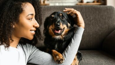 Photo of 3 Ways Pets Resemble Humans (And 3 Ways They Don't)